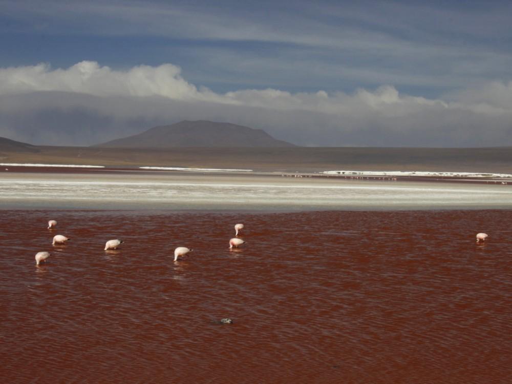 PERU, BOLIVIE. 079